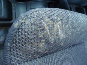 車内のシートに付着したカビをシートクリーニング